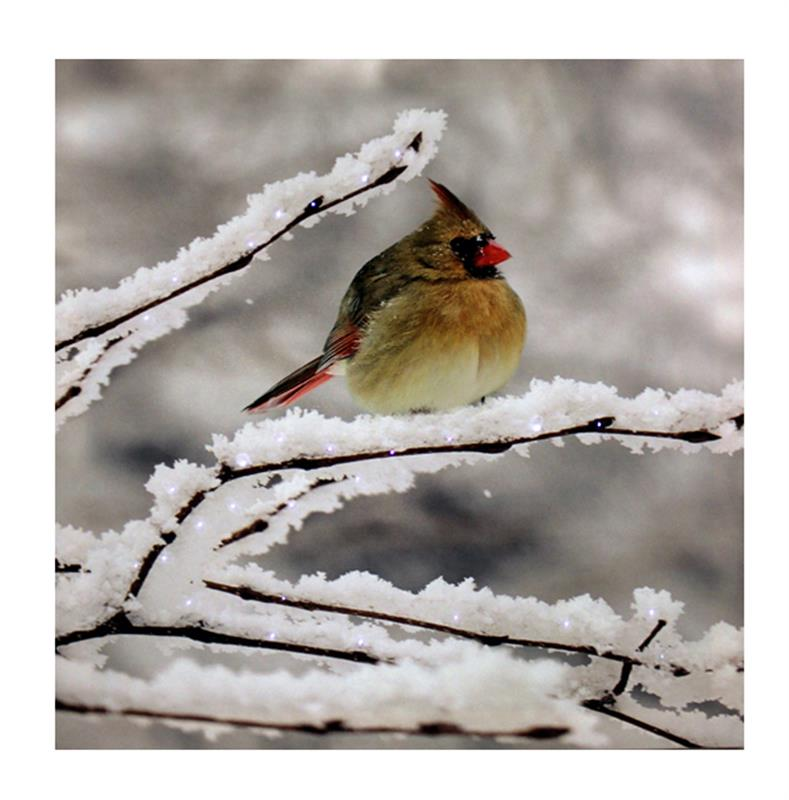 Winter Cardinal Canvas